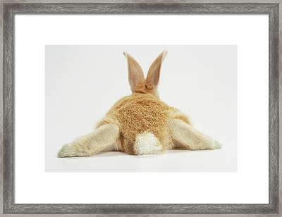 Beige Bunny Rabbit On White Background Framed Print by American Images Inc