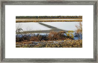 Blackwater National Wildlife Refuge Framed Print