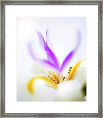 Framed Print featuring the photograph White Iris II by John Rodrigues