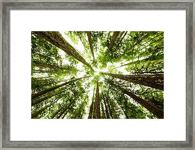 Lush Green Rain Forest Framed Print by Jordan Siemens