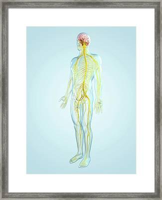 Nervous System, Artwork Framed Print by Sciepro