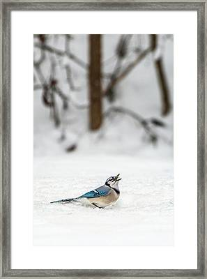 Framed Print featuring the photograph 2019 First Snow Fall by Cindy Lark Hartman