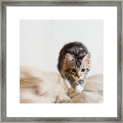 Jumping Kitten Framed Print by Ryuichi Miyazaki