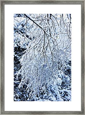 30/01/19  Rivington. Snow Covered Branches. Framed Print