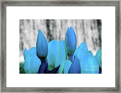 4-8-2010img6893abcdefghijk Framed Print