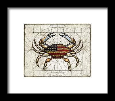 Arthropods Framed Prints