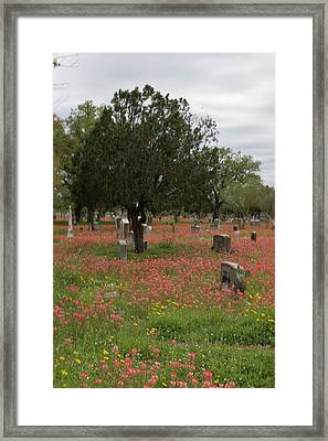Untitled  Framed Print by Melissa Torres