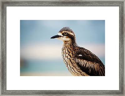 Framed Print featuring the photograph Bush Stone-curlew Resting On The Beach. by Rob D