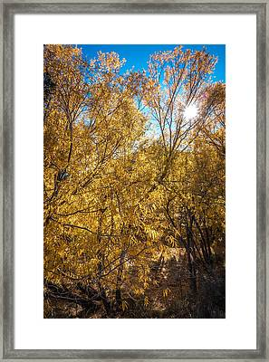 Framed Print featuring the photograph Autumnal Park. Autumn Trees And Leaves. Fall by Alex Grichenko