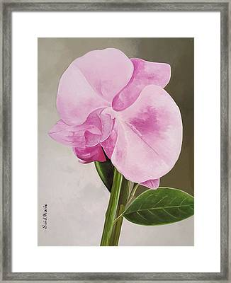 A Beautiful Rose Framed Print