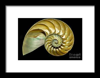 Golden Ratio Framed Prints