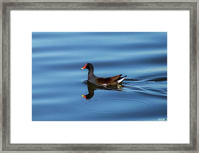 A Day For Reflection Framed Print