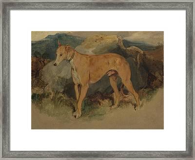 A Deerhound Framed Print