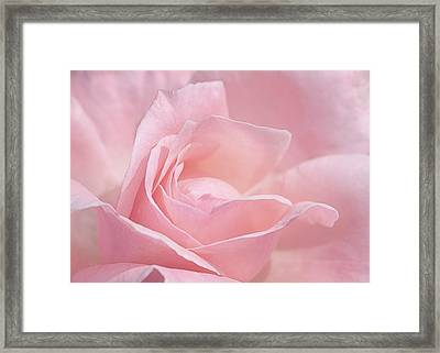 Framed Print featuring the photograph A Delicate Pink Rose by Susan Rissi Tregoning