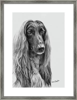 A Kind And Regal Spirit Framed Print