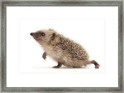 Framed Print featuring the photograph A Prickly Problem by Warren Photographic