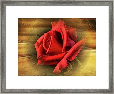 A Red Rose On Gold Framed Print