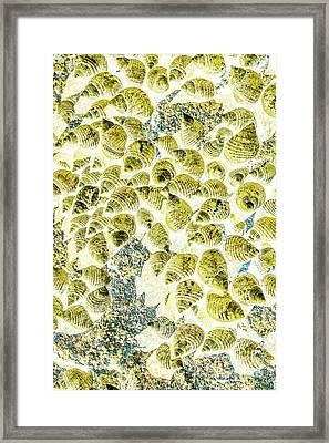 A Seashell Abstract Framed Print
