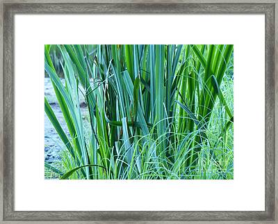Framed Print featuring the photograph A Shock Of Green by Rosanne Licciardi