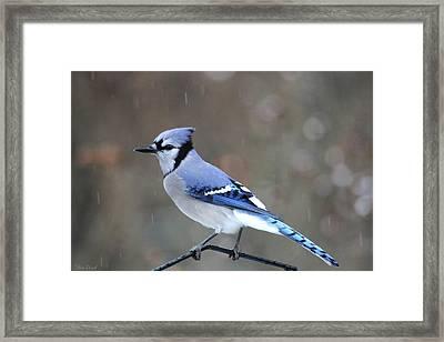 A Snowy Day With Blue Jay Framed Print