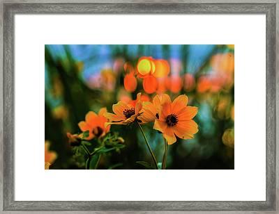 Sunflower Bokeh Sunset Framed Print