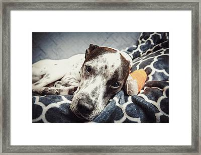 Abbey And Her Injured Paw Framed Print