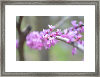 Framed Print featuring the photograph Absence by Michelle Wermuth