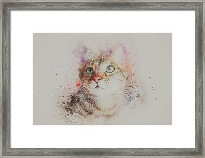 Abyssinian Cat Framed Print