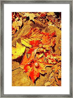 Acorns Fall Maple Oak Leaves Framed Print