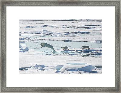 Across The Sea Ice Framed Print by Galaxiid