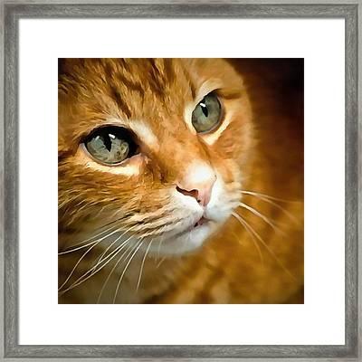 Adorable Ginger Tabby Cat Posing Framed Print