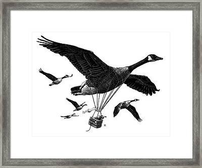 Aero Canada - Bw Framed Print