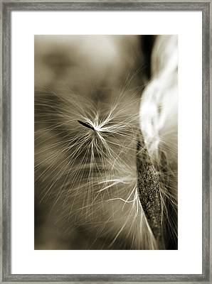 Framed Print featuring the photograph Almost by Michelle Wermuth
