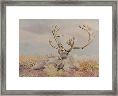 Alpine Ibex Framed Print