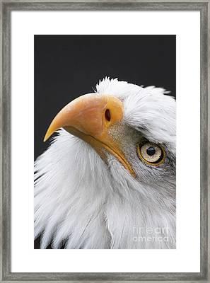 Always Look Up Framed Print