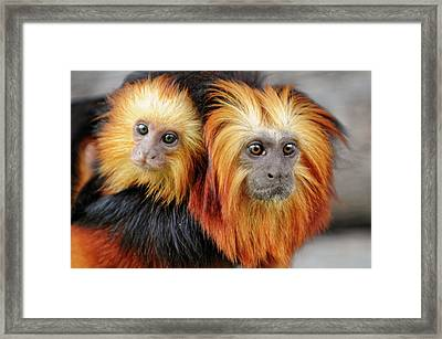 Always With Mom Framed Print by Picture By Tambako The Jaguar