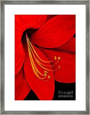 Amaryllis 2 Framed Print