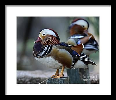 Avian Framed Prints