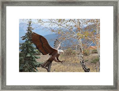 American Eagle In Autumn Framed Print