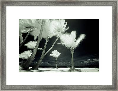 An Infrared Image Of Tall Palm Trees Framed Print