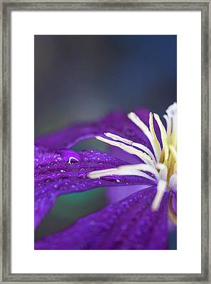 Framed Print featuring the photograph Ancient Joy by Michelle Wermuth