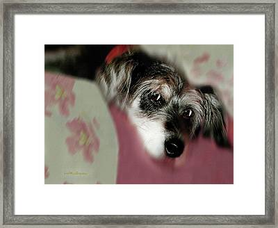 And This Is Sparky6 Framed Print