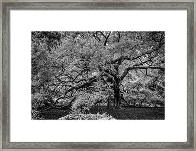 Framed Print featuring the photograph Angel Oak Tree Black And White by Rick Berk
