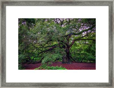 Framed Print featuring the photograph Angel Oak Tree by Rick Berk