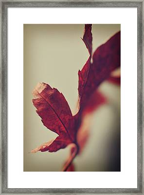 Framed Print featuring the photograph Anxious Nights by Michelle Wermuth