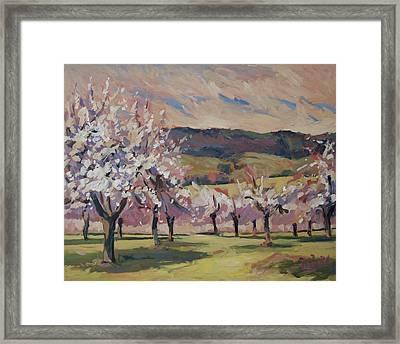 Apple Blossom Geuldal Framed Print