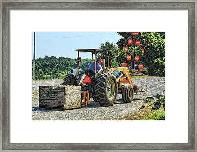 Framed Print featuring the photograph Apple Orchard by Tatiana Travelways