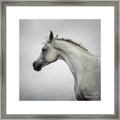 Framed Print featuring the photograph Arabian Horse Portrait by Dimitar Hristov