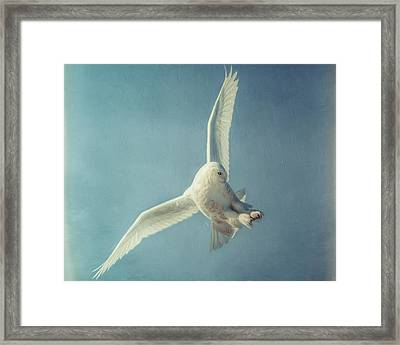 Arctic Angel Framed Print