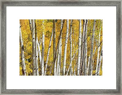 Aspen Autumn Framed Print